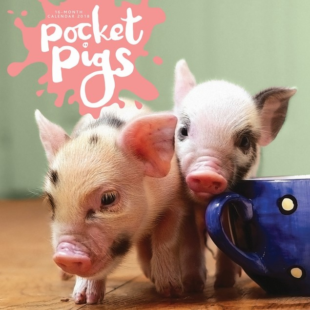 Pocket Pigs Wall Calendar, Pigs by Vista Stationery & Print Ltd
