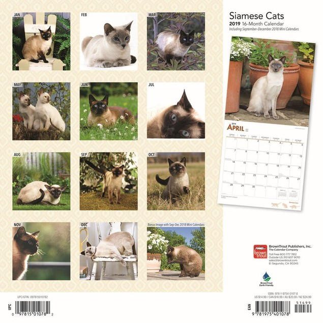 Cats Siamese Wall Calendar, Cat Breeds by Calendars