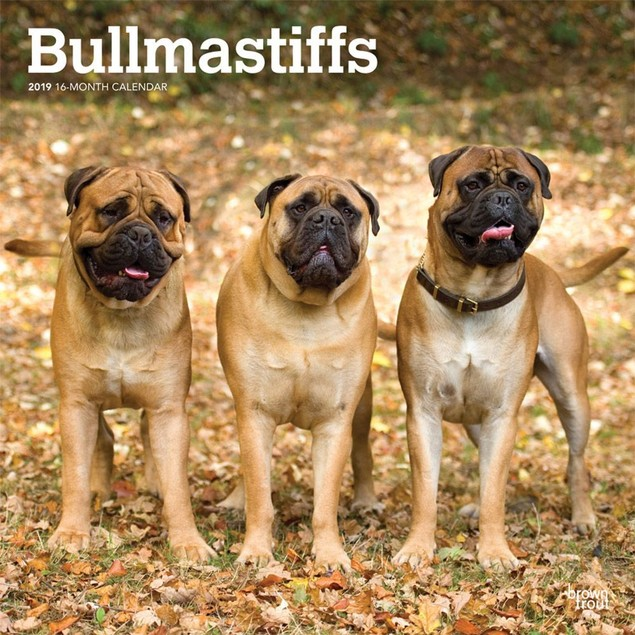 Bullmastiffs Wall Calendar, Bullmastiff by Calendars