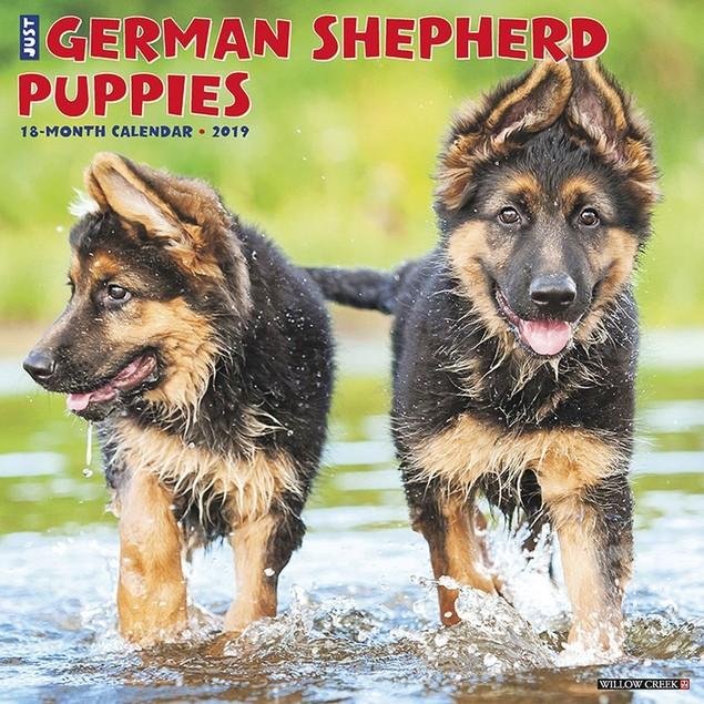 Just German Shepherd Puppies Wall Calendar, German Shepherd by Calendars