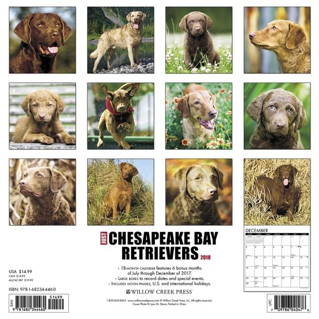 Just Chesapeake Bay Retrievers Wall Calendar
