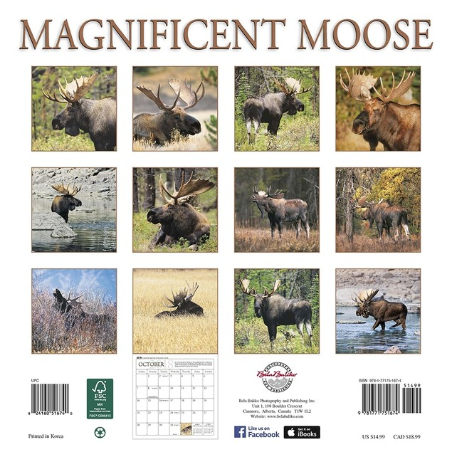 Magnificent Moose Wall Calendar, Deer by Bela Baliko Photography