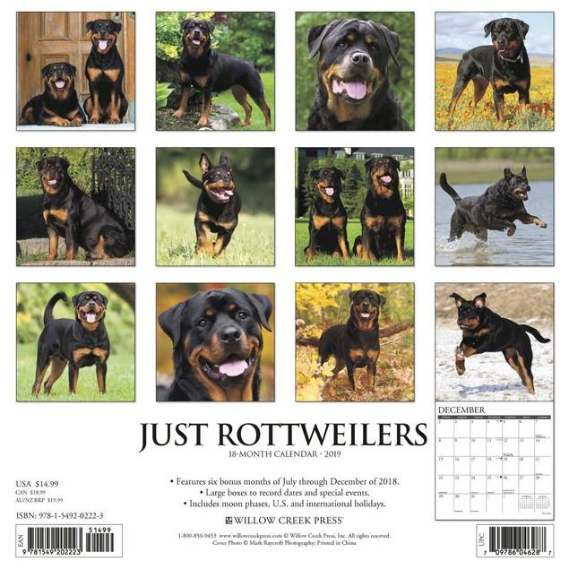 Just Rottweilers Wall Calendar, Rottweiler by Calendars