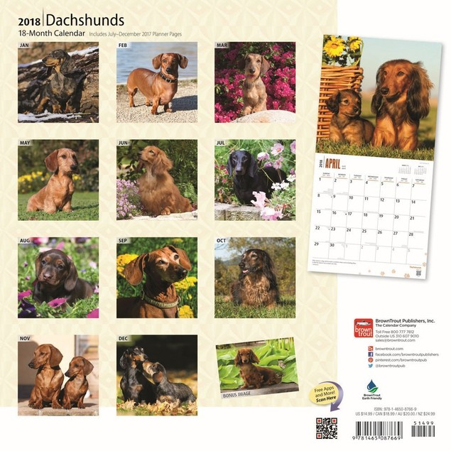 Dachshunds Deluxe Wall Calendar, Dachshund by Calendars