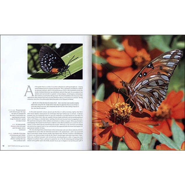 Butterflies: Decoding Their Signs and Symbols Book, Butterfly   Insects by
