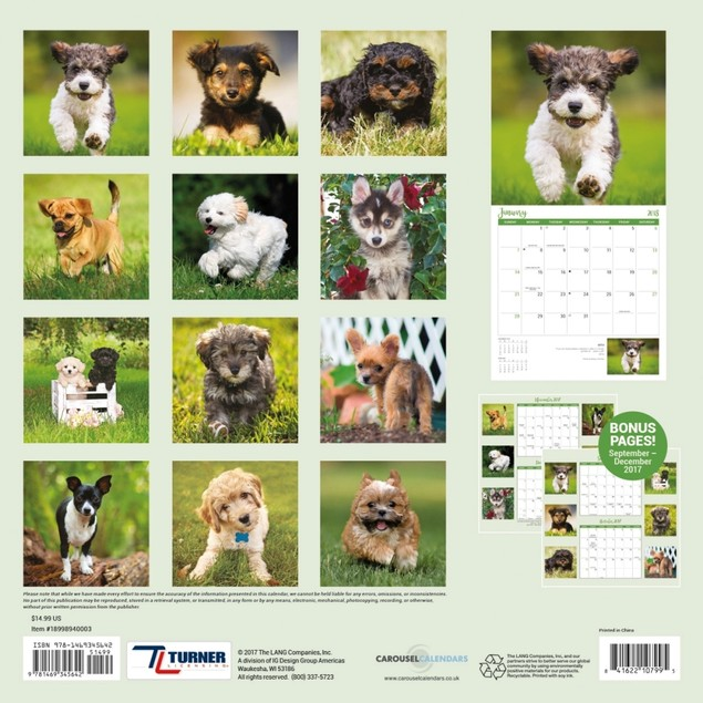 All Mixed Up Wall Calendar, More Dogs by Avalanche Publishing