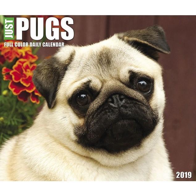 Just Pugs Desk Calendar, Pug by Calendars