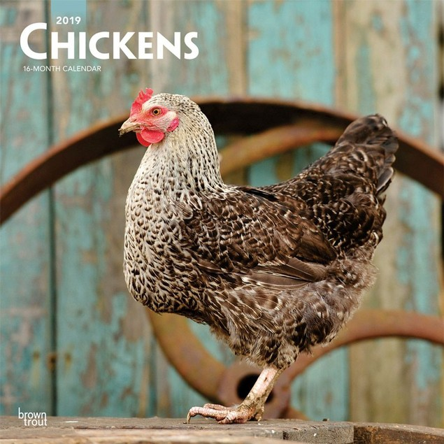 Chickens Wall Calendar, Roosters | Chickens by Calendars
