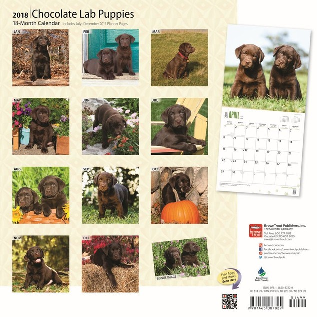 Lab Retriever Chocolate Puppies Wall Calendar