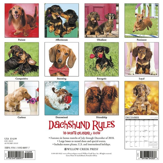 Dachshund Rules Wall Calendar, Dachshund by Calendars
