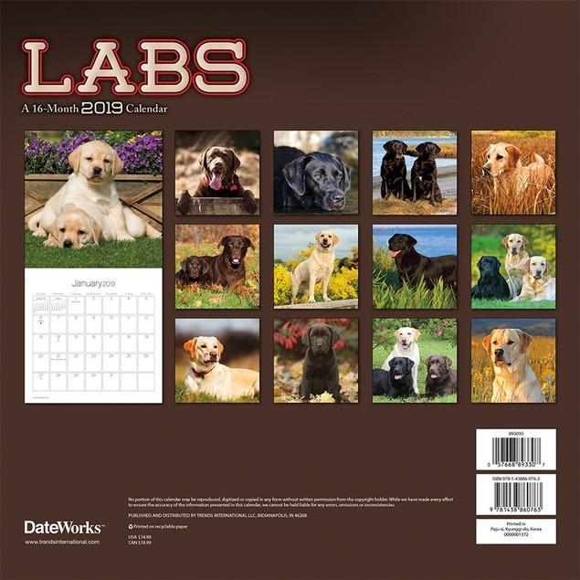 Labs Wall Calendar, Labrador Retriever by Calendars