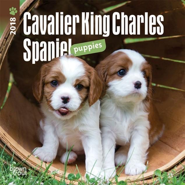 Cavalier King Charles Puppies Mini Wall Calendar, Cavalier King Charles Spa