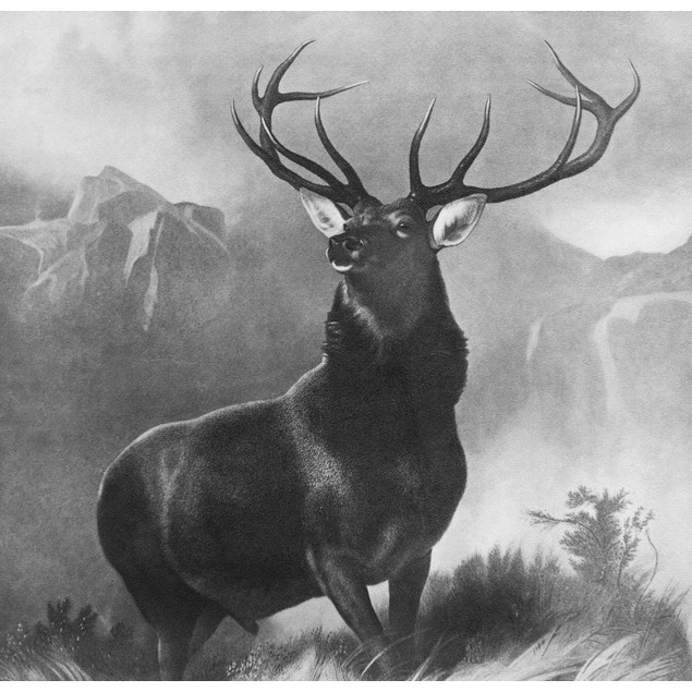 Landseer: Stag, 1851. /Nmonarch Of The Glen. After The Painting By Edwin La
