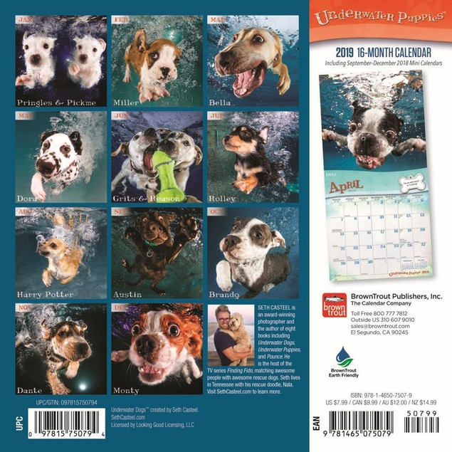 Underwater Puppies Mini Wall Calendar, Funny Dogs by Calendars