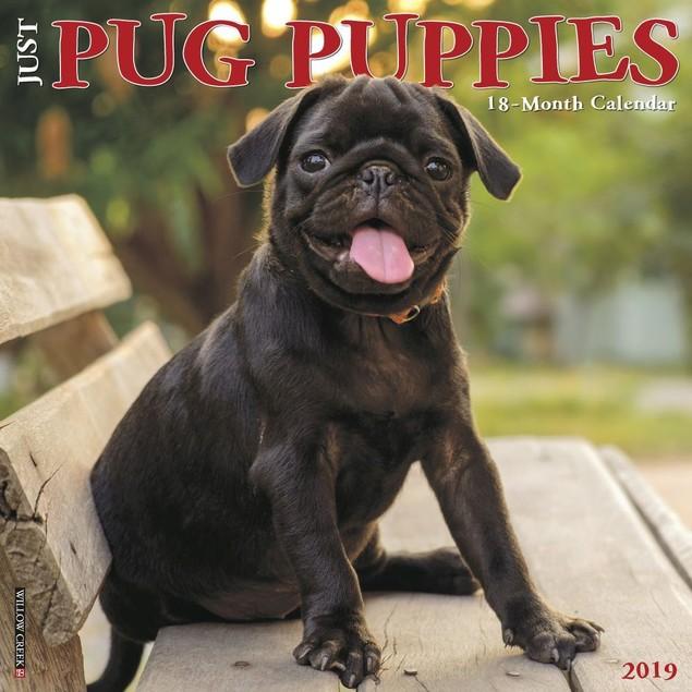 Just Pug Puppies Wall Calendar | Willow Creek Press |, Pug by Calendars
