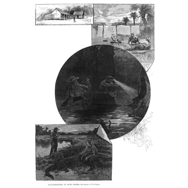 Florida: Alligator Hunting. /Nscenes Of Alligator Hunting Near Fort Basinge