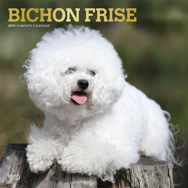 Bichon Frise Wall Calendar, Bichon Frise by Calendars