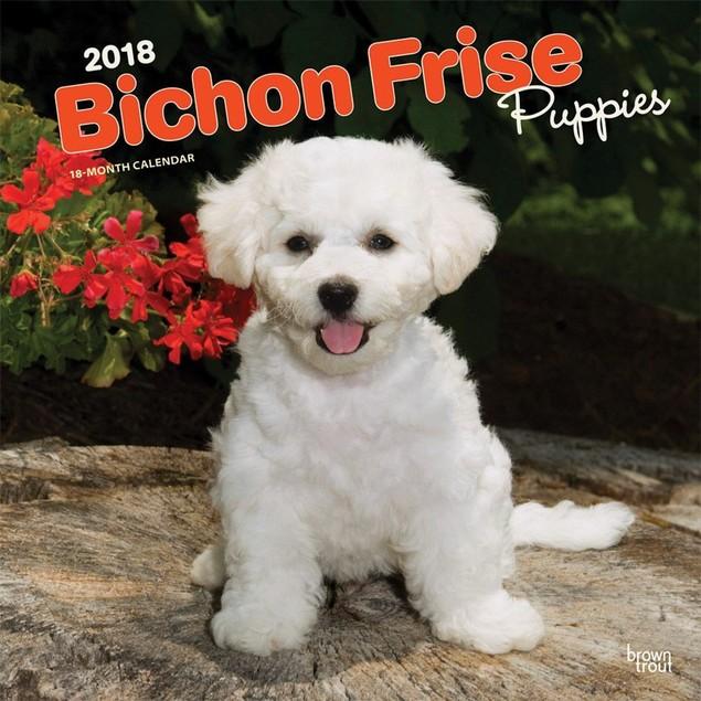 Bichon Frise Puppies Wall Calendar, Bichon Frise by Calendars