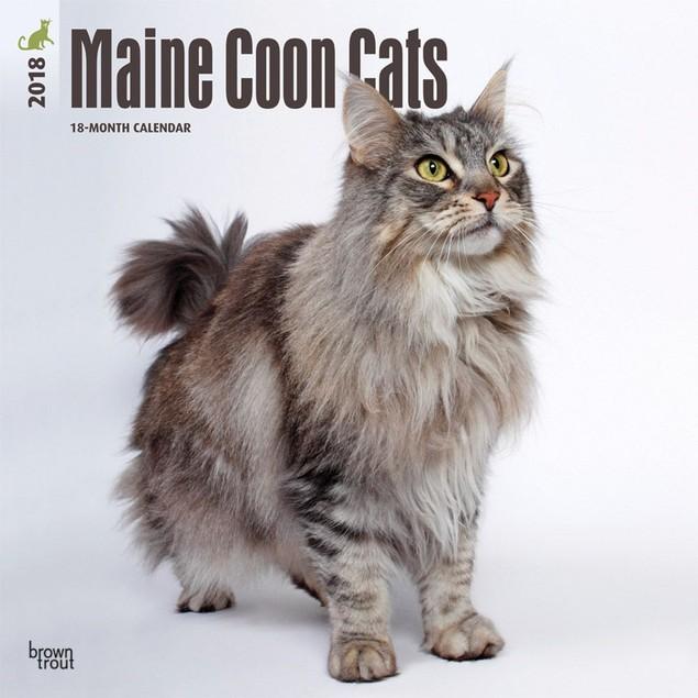 Cats Maine Coon Wall Calendar, Cat Breeds by Calendars