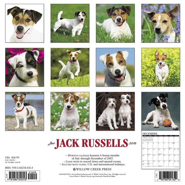 Just Jack Russells Wall Calendar