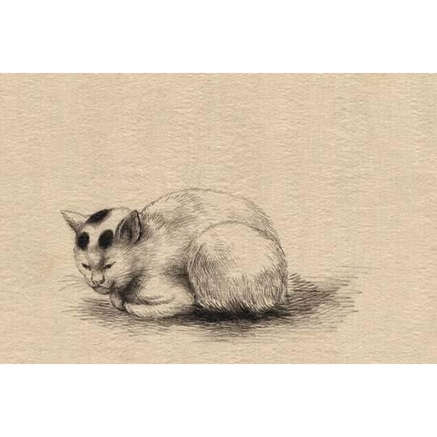 Drawing shows a cat..  High quality vintage art reproduction by Buyenlarge.