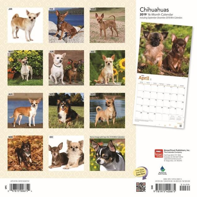 Chihuahuas Wall Calendar, Chihuahua by Calendars