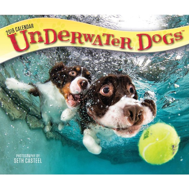 Underwater Dogs Desk Calendar, Funny Dogs by BrownTrout