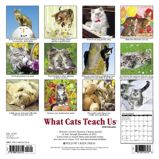 Cats What Cats Teach Us Mini Wall Calendar