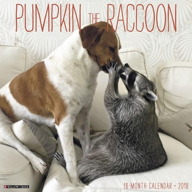 Pumpkin the Raccoon Wall Calendar, Wildlife by Willow Creek Press