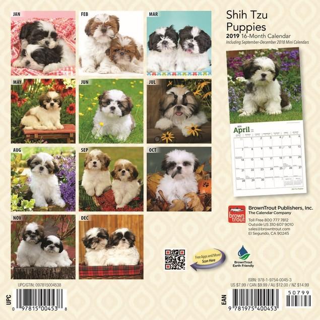 Shih Tzu Puppies Mini Wall Calendar, Shih Tzu by Calendars