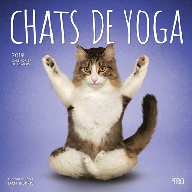 Yoga Cats Wall Calendar, Funny Cats by Calendars