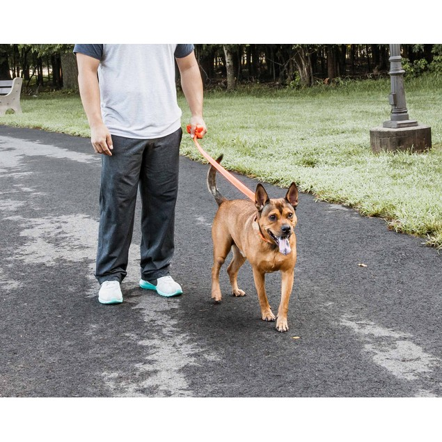 Pet Life 'Aero Mesh' Comfortable And Breathable Adjustable Mesh Dog Leash