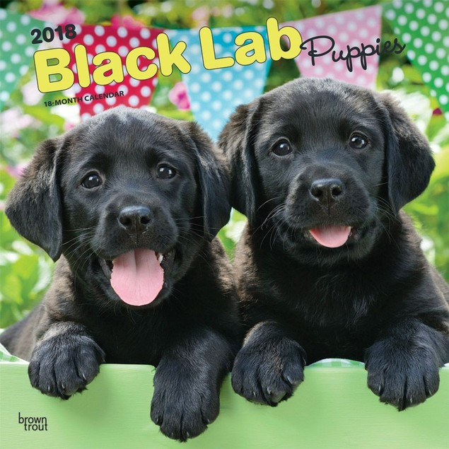 Lab Retriever Black Puppies Wall Calendar, Black Lab by Calendars