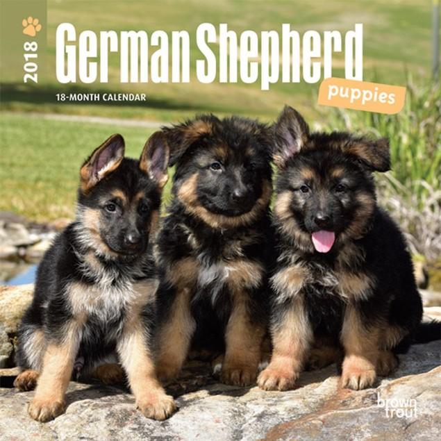 German Shepherd Puppies Mini Wall Calendar, German Shepherd by Calendars