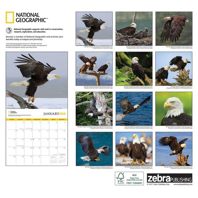 Eagles NG Wall Calendar, Birds by Calendars