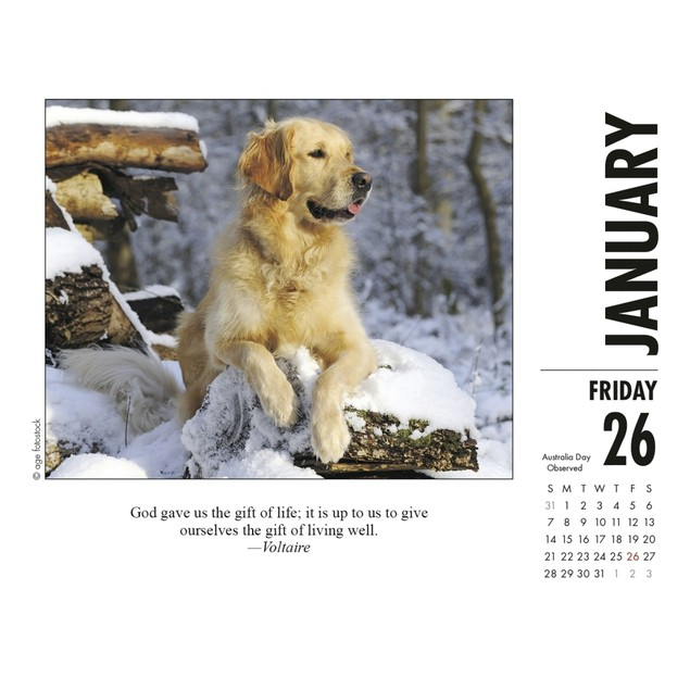 What Dogs Teach Us Desk Calendar, More Dogs by Calendars