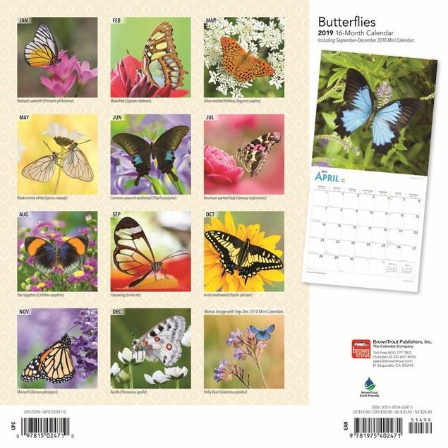Butterflies Wall Calendar, Butterfly | Insects by Calendars