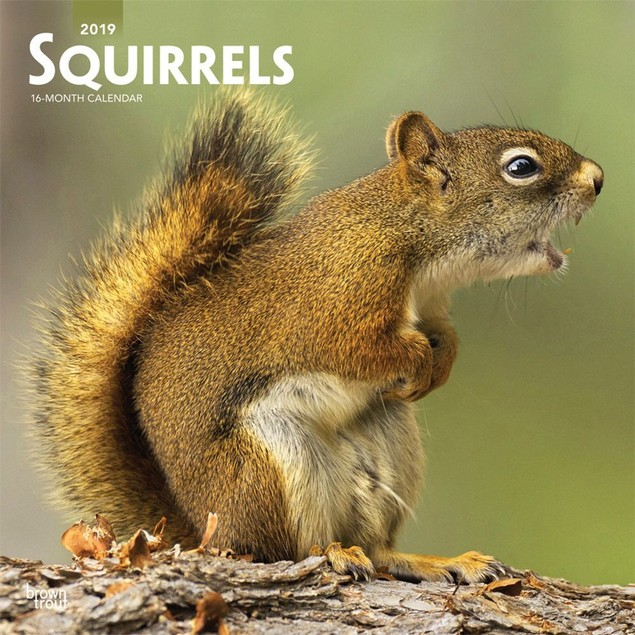 Squirrels Wall Calendar, Wildlife by BrownTrout