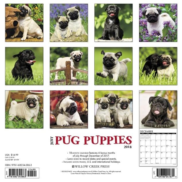 Just Pug Puppies Wall Calendar, Pug by Calendars