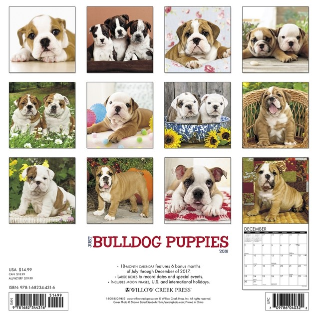 Just Bulldog Puppies Wall Calendar, Bulldog by Calendars