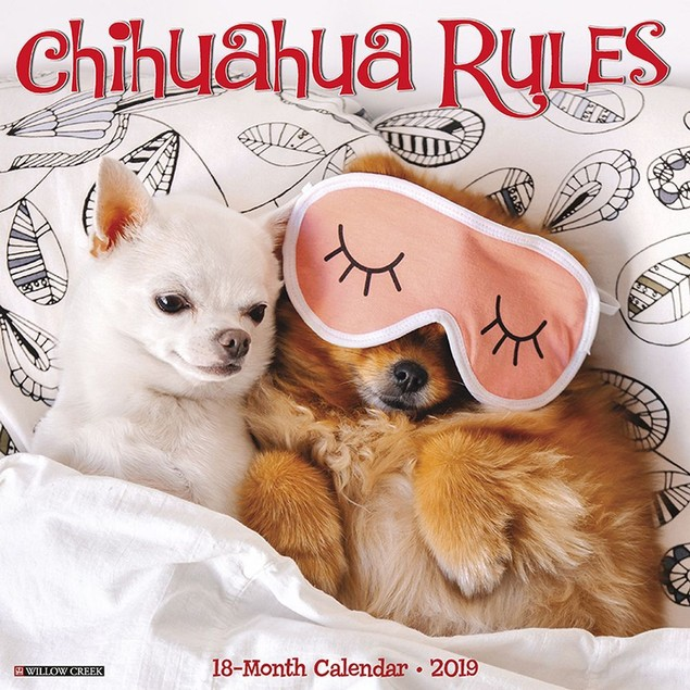 Chihuahua Rules Wall Calendar, Chihuahua by Calendars