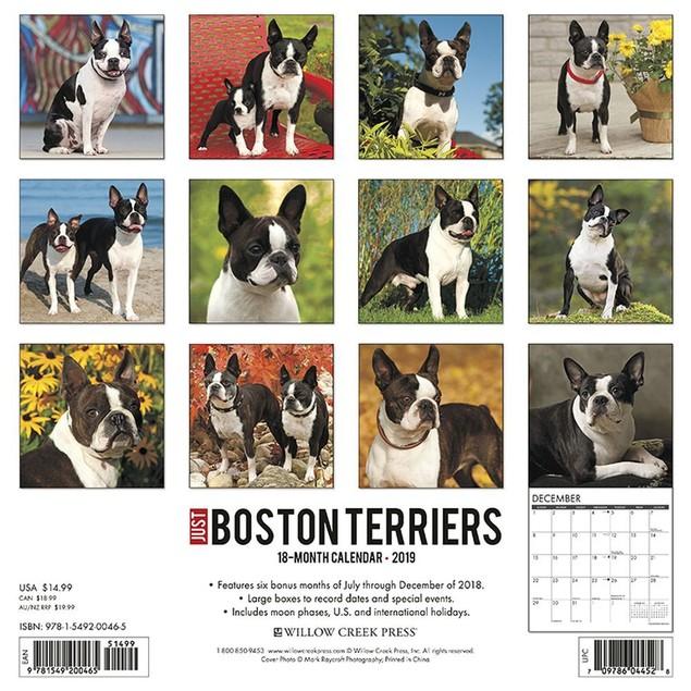 Just Boston Terriers Wall Calendar, Boston Terrier by Calendars