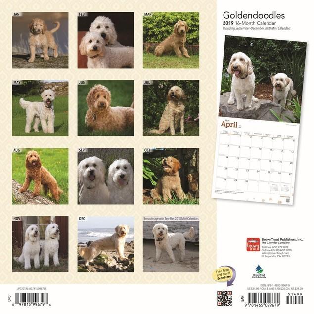 Goldendoodles Wall Calendar, Goldendoodle by Calendars