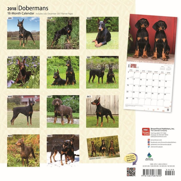Dobermans Wall Calendar, Doberman Pinscher by Calendars