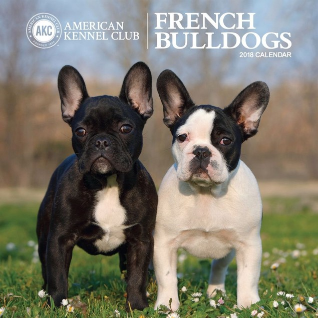 French Bulldogs AKC Wall Calendar, French Bulldog by Calendars