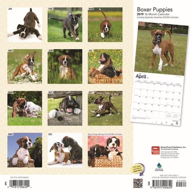 Boxer Puppies Wall Calendar, Boxer by Calendars