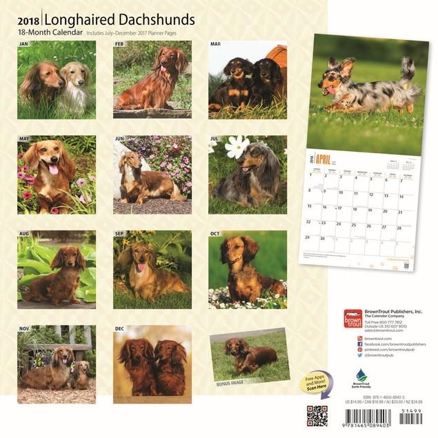 Dachshunds Longhaired Wall Calendar, Dachshund by Calendars