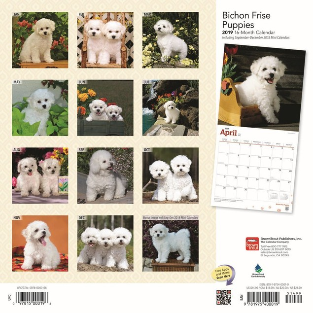 Bichon Frise Puppies Wall Calendar, Bichon Frise by Calendars