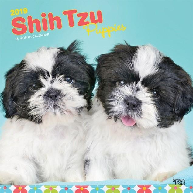 Shih Tzu Puppies Wall Calendar, Shih Tzu by Calendars