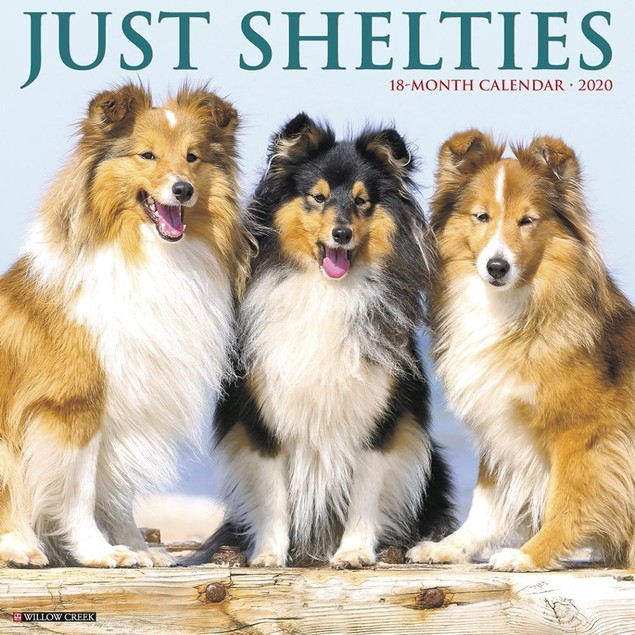 Just Shelties Wall Calendar, Shetland Sheepdog by Calendars